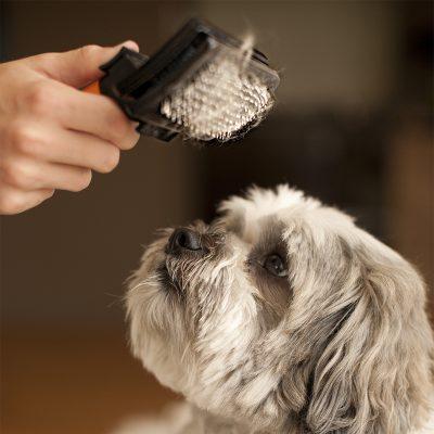Award Winning Self Cleaning Slicker Brush