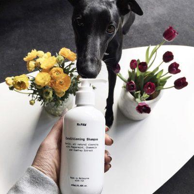MrPaw Natural Dog Conditioning Shampoo healthy pets