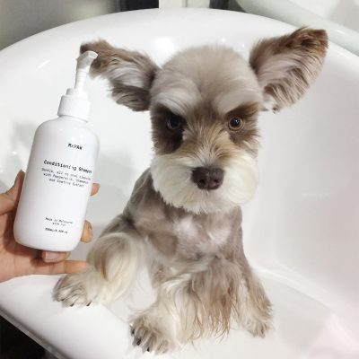 MrPaw Natural Dog Conditioning Shampoo with dog at bath time
