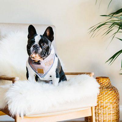 white and black dog wearing the Master Thought Bandana