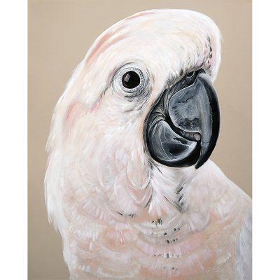 HEYLIE MORRIS // Moluccan Cockatoo