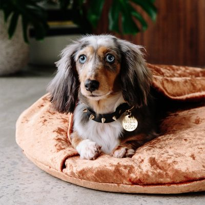 NICE DIGS // Gold Spike Noir Leather Dog Collar